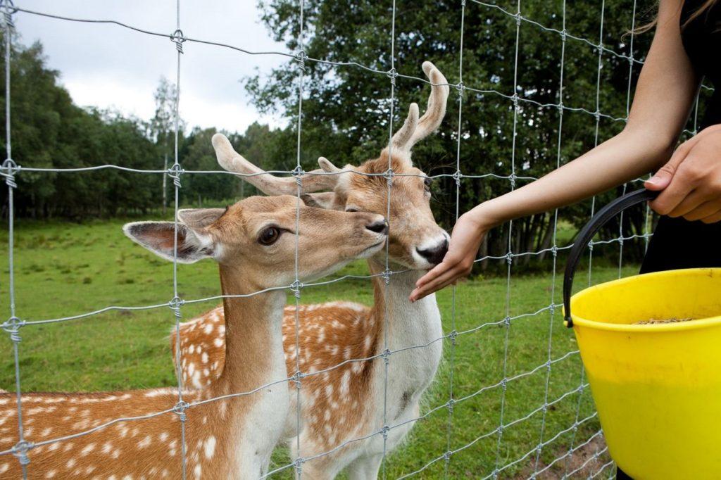 Погладить лань и покормить оленя: лучшая экоферма Подмосковья