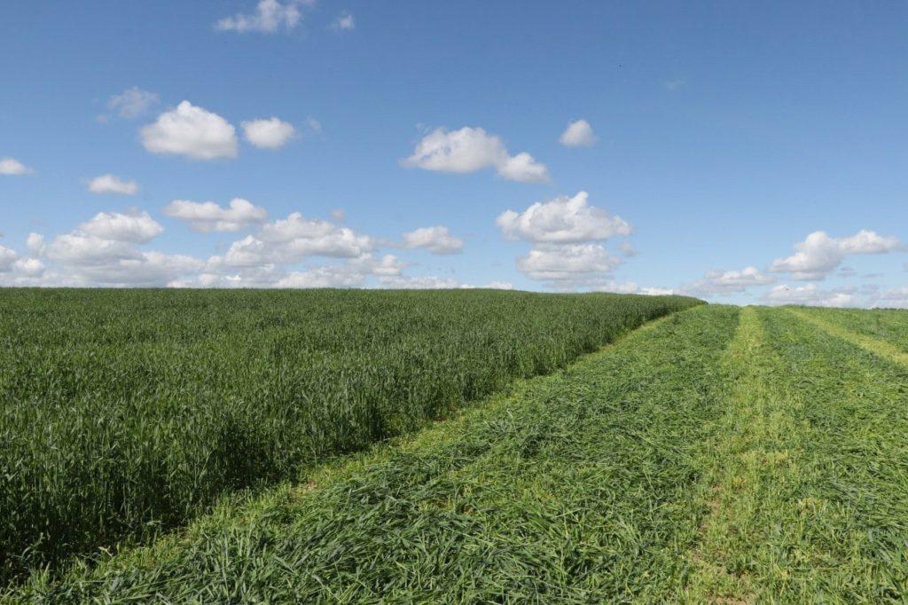 Запланированные объёмы весеннего сева в Волоколамском округе выполнены