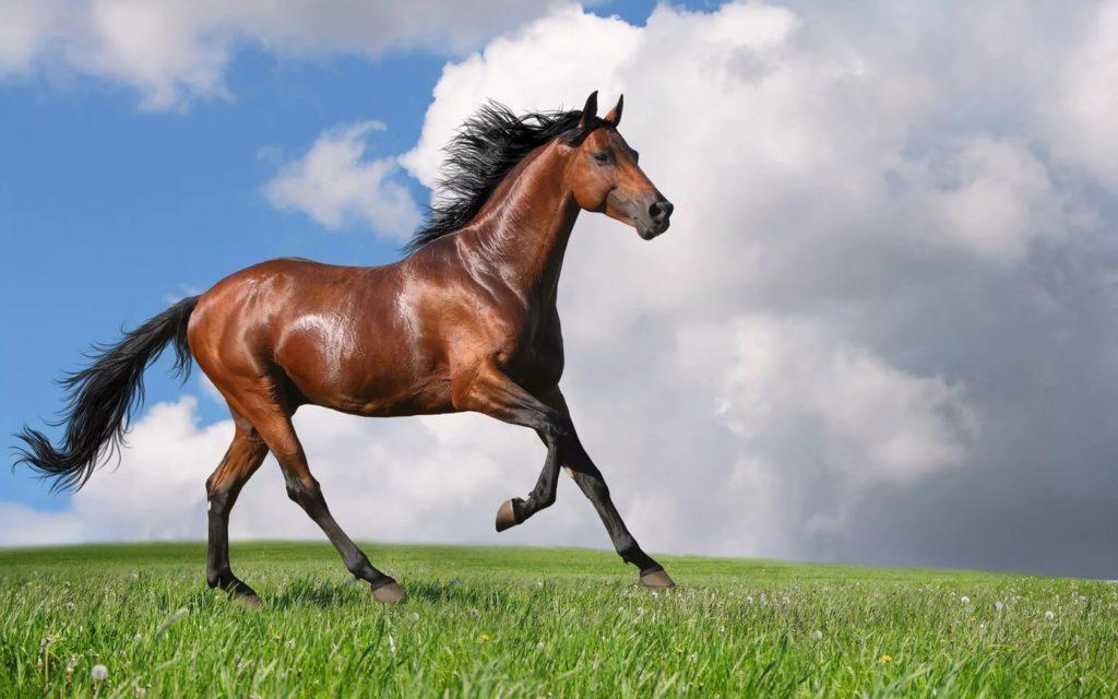 Агроусадьба «Дом лошади»: «Рай на земле – у лошади на спине»