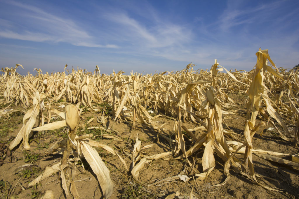 Как защитить урожай от аномальной жары