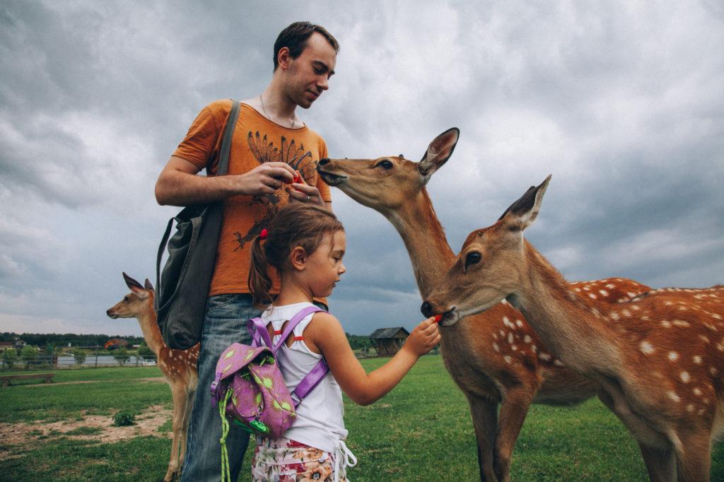 Маршрут на выходные: «Оленья ферма» под Волоколамском