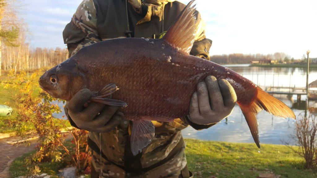 Рыболовная база отдыха «Ихтиолог» – как отдохнуть с пользой