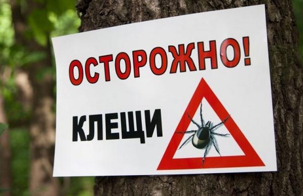 В Волоколамском городском парке проведут обработку от клещей