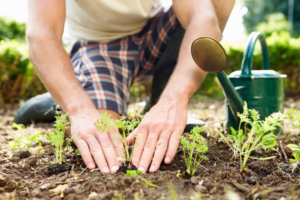 Задел на будущий год или какие работы в августе станут залогом урожайности в будущем году