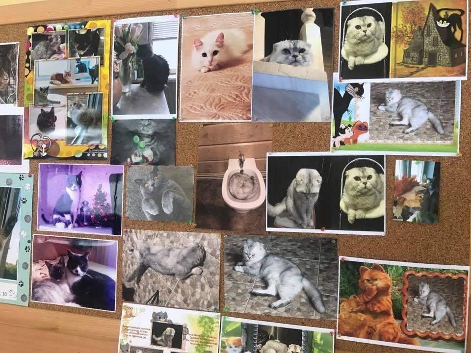 Жители и гости Волоколамского округа могут посетить уникальную фотовыставку «Всемирный день кошки»