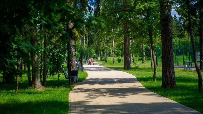 В Подмосковье выбрали около 2,7 тыс свободных от застройки «зеленых зон»