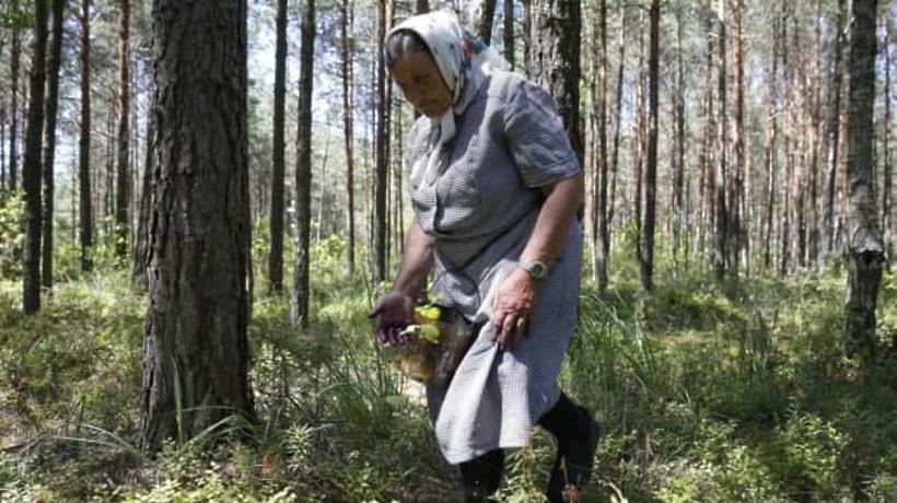 89 человек заблудились в лесах Подмосковья с начала августа