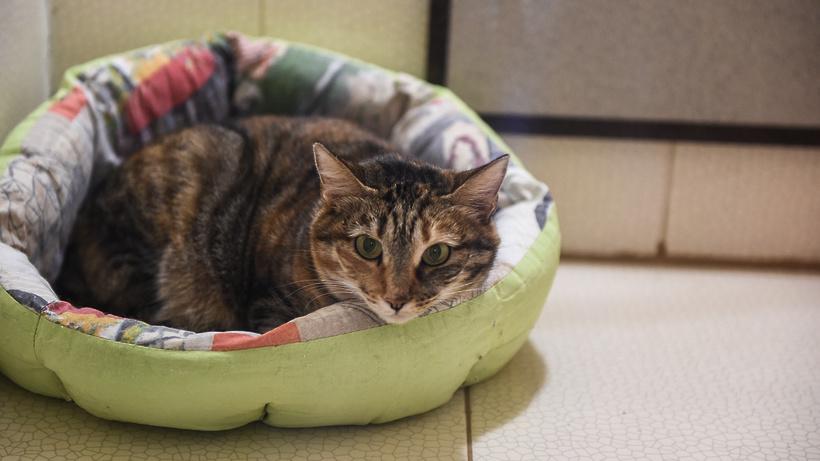 42 приюта для бездомных животных работают в Подмосковье