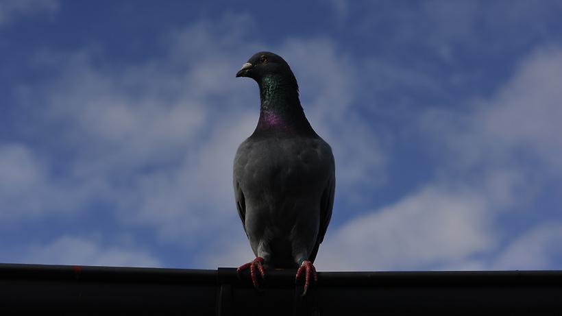 Власти назвали возможную причину массовой гибели диких птиц в Подмосковье