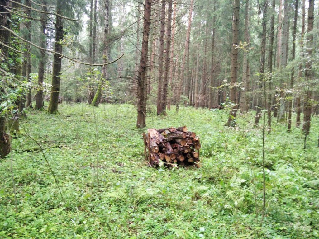 Волоколамские лесничие продолжают приводить в порядок леса