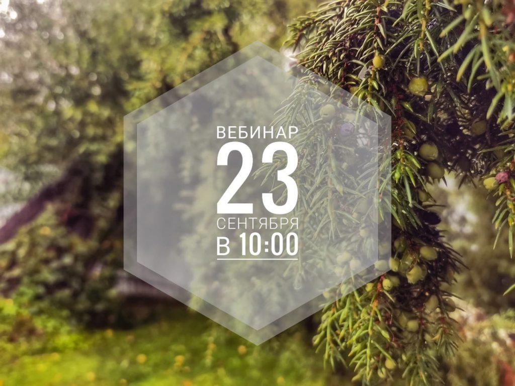На самые актуальные вопросы осеннего сезона ответят Волоколамские лесничие в рамках онлайн-вебинара