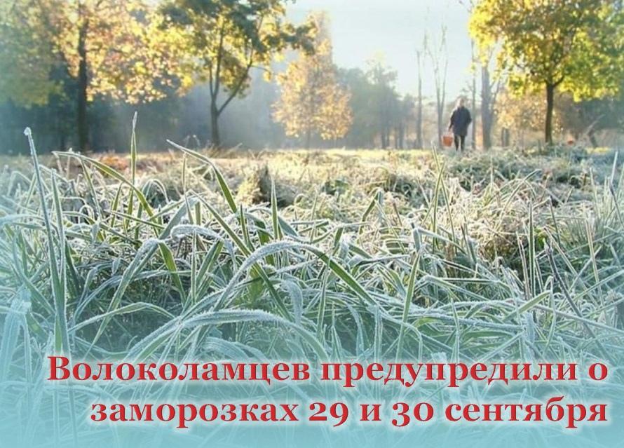 Волоколамцев предупреждают о предстоящих заморозках