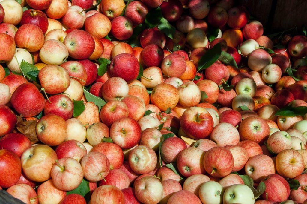 Излишки урожая можно сдать на специальной площадке в Волоколамском округе