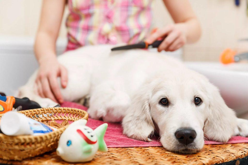 Советы, которые упростят жизнь владельцев домашних животных