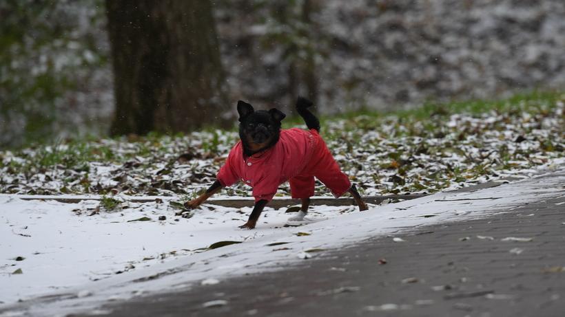 Первый снег может пойти в Подмосковье уже 20 сентября