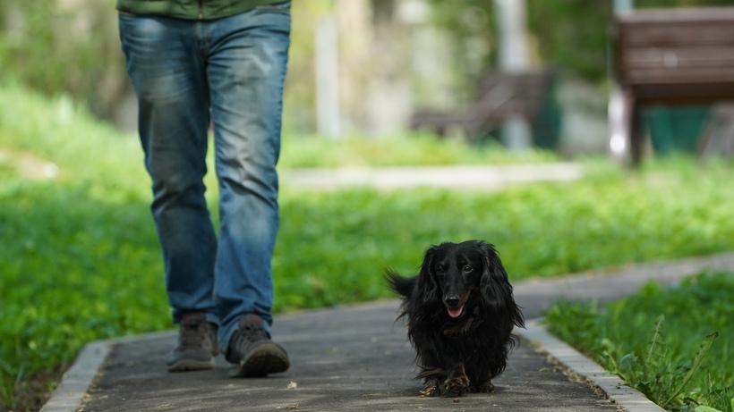 Жители Подмосковья заплатили около 47 тыс руб штрафов за нарушение выгула собак