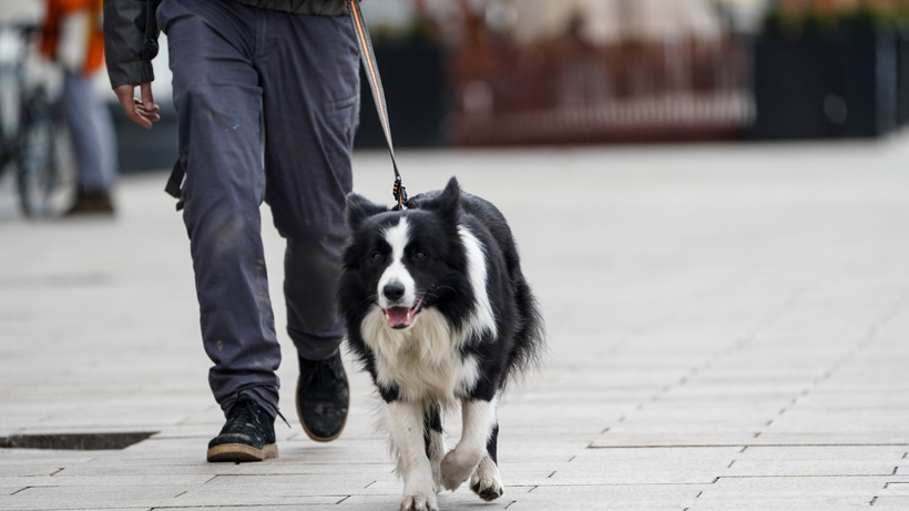 Свыше 200 тыс рублей штрафов выписали за неправильный выгул собак в Подмосковье