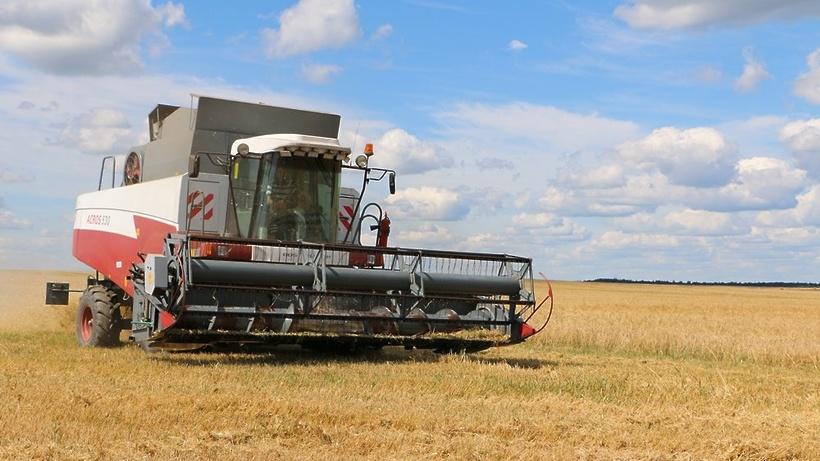 Заготовку корма из кукурузного силоса начали в Подмосковье