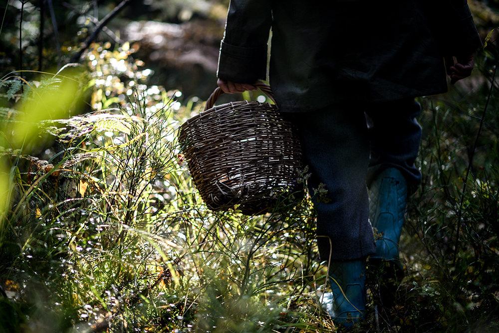 «Тихая охота» стала опасной и в Волоколамском округе