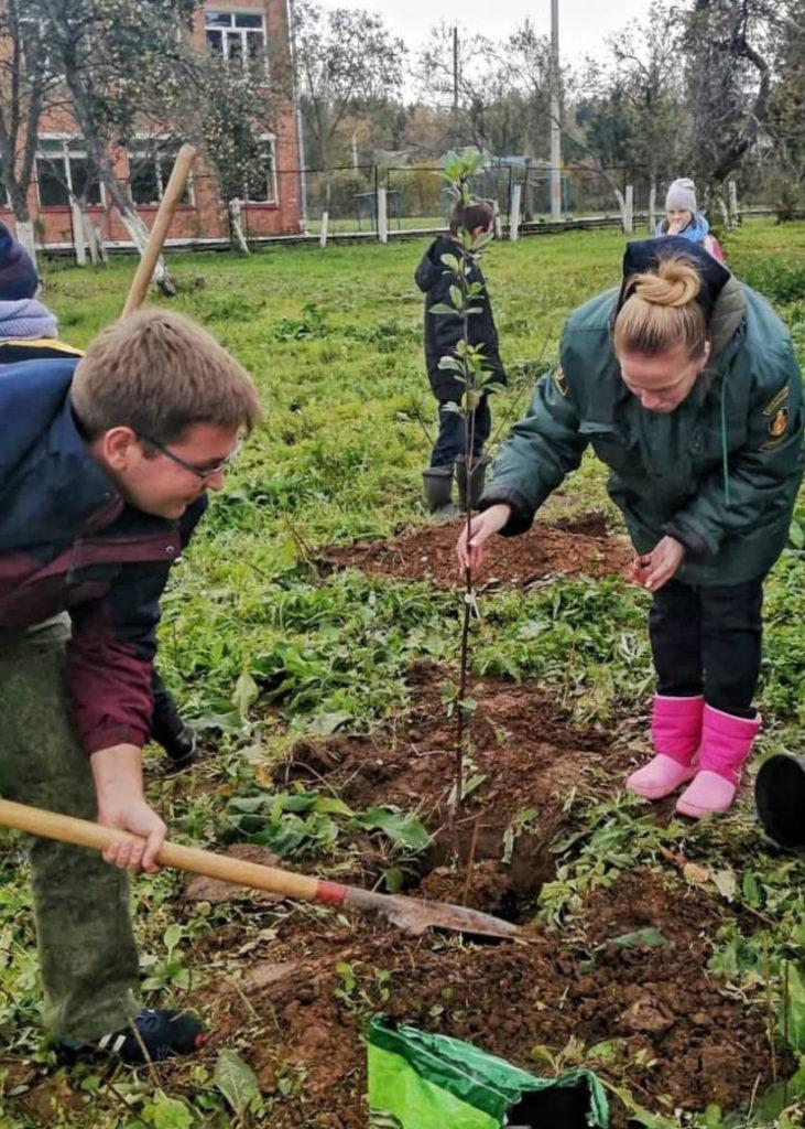 Школьное лесничество посадило плодовые деревья в Волоколамском округе