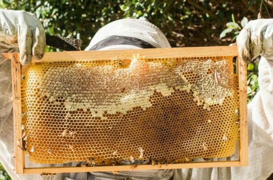 Уважаемые пчеловоды, любители!